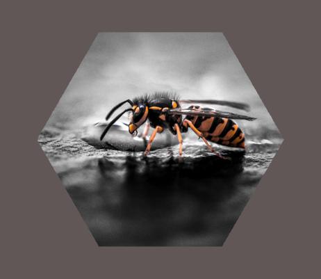 wb-profile-01_bee